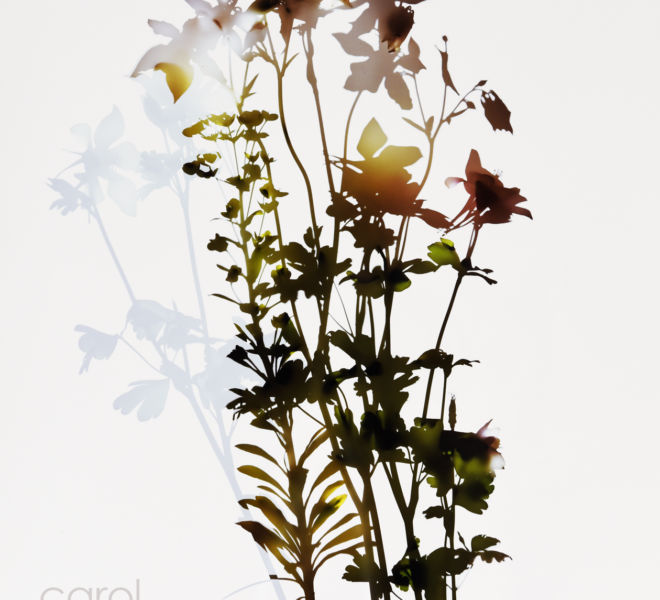 Bouquet Shadow