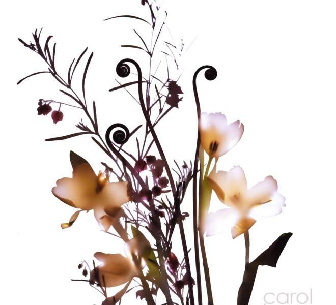 Bouquet Shadowgraph