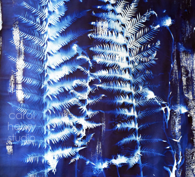 Moonlight Ferns